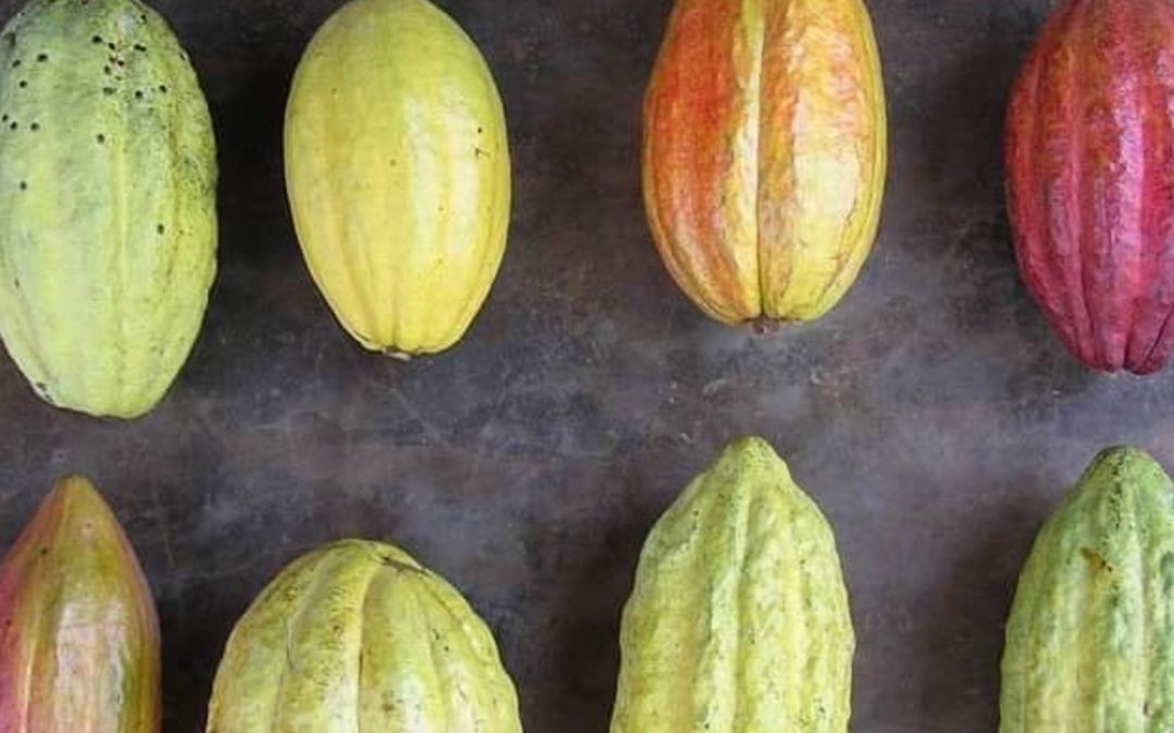 Bean-to-bar chocolate: how it's made